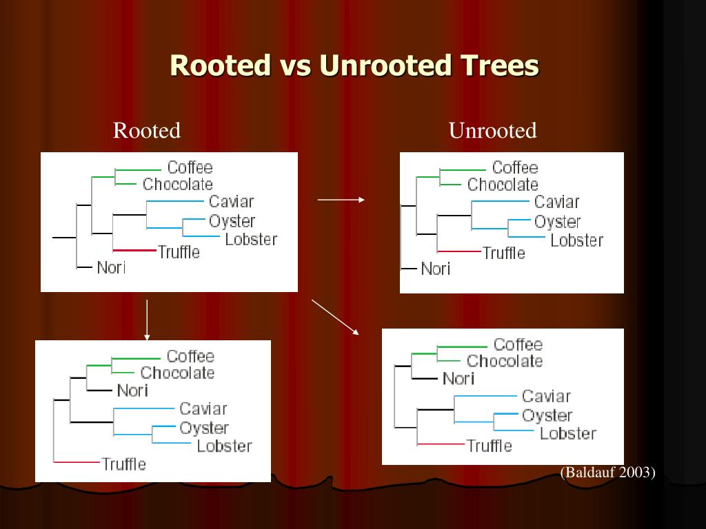 Rooted vs Unrooted Trees