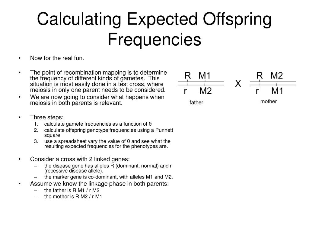 Calculating Expected Offspring Frequencies