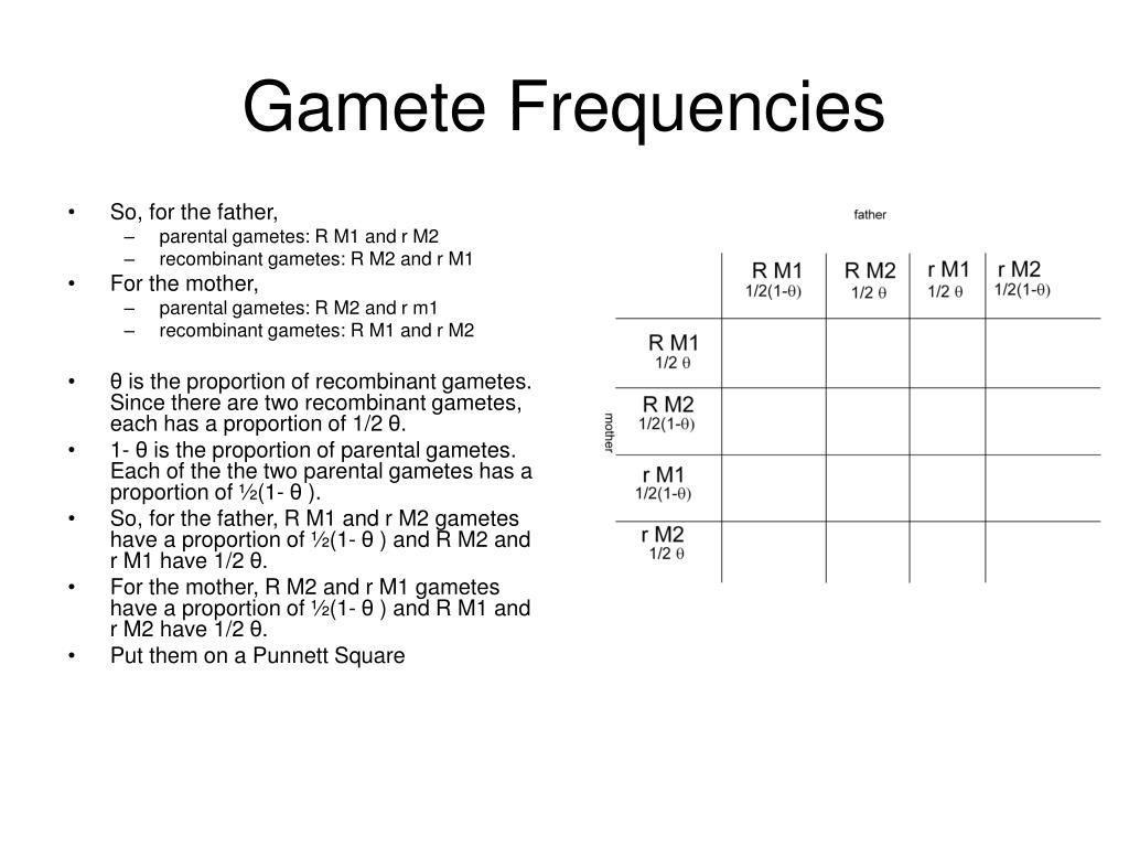 Gamete Frequencies