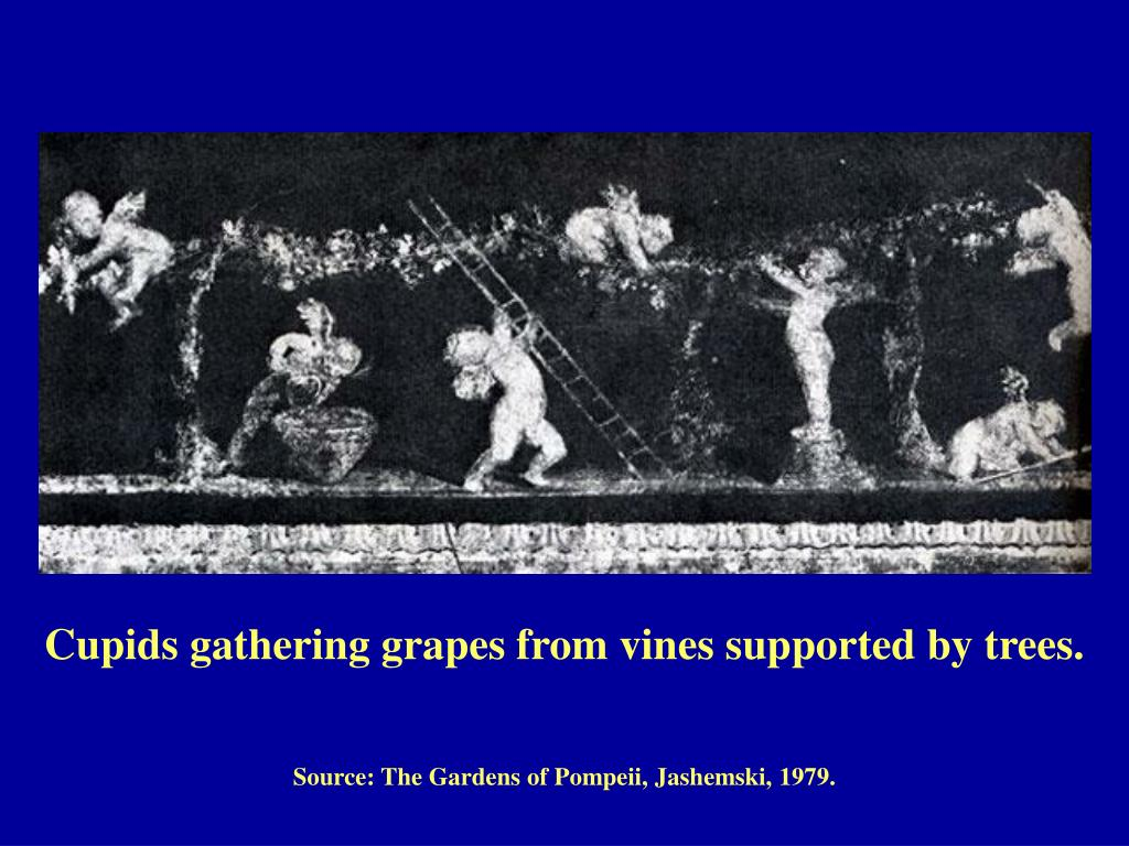 Cupids gathering grapes from vines supported by trees.
