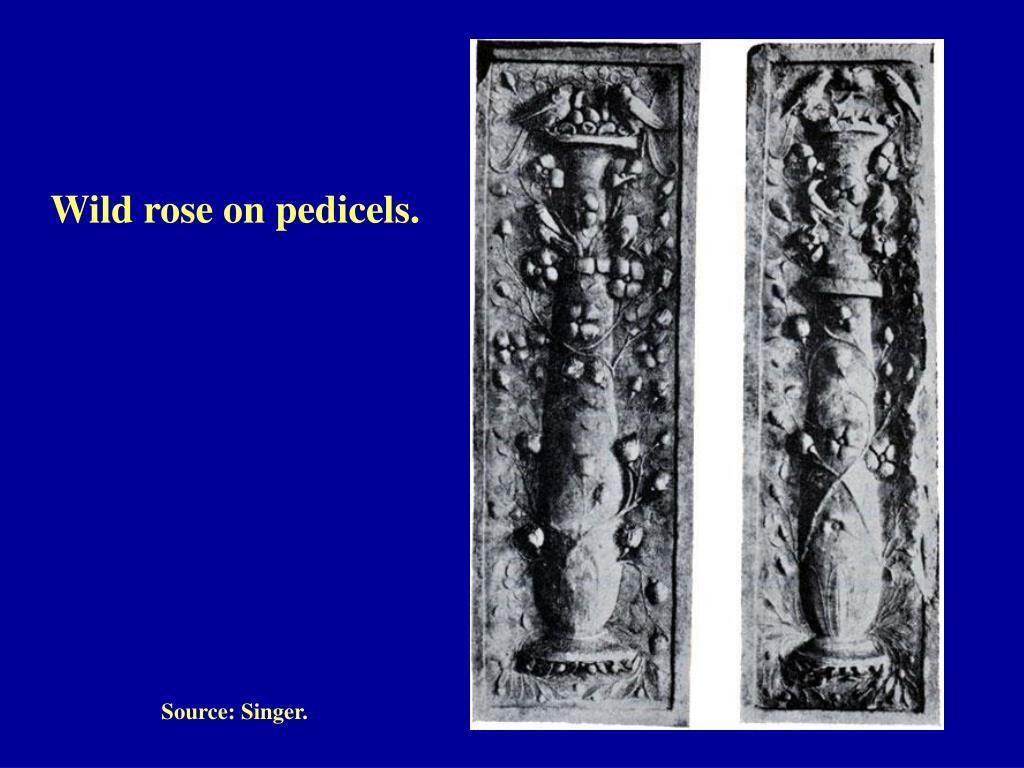 Wild rose on pedicels.