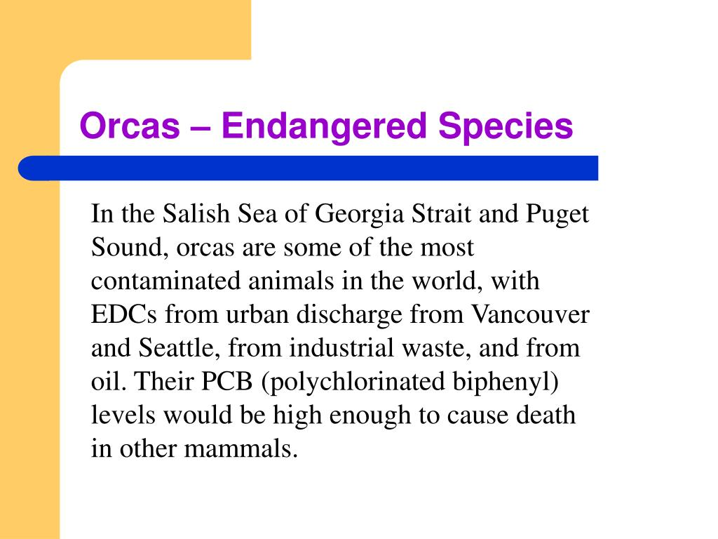 Orcas – Endangered Species