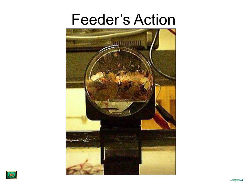 Feeder's Action