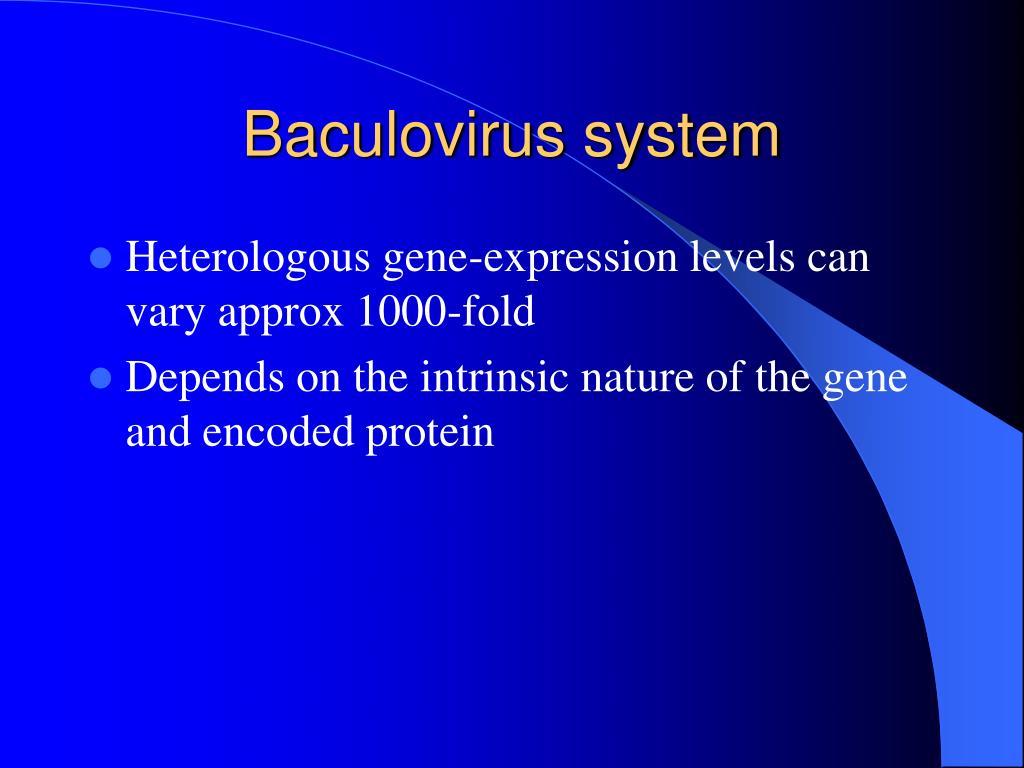 Baculovirus system