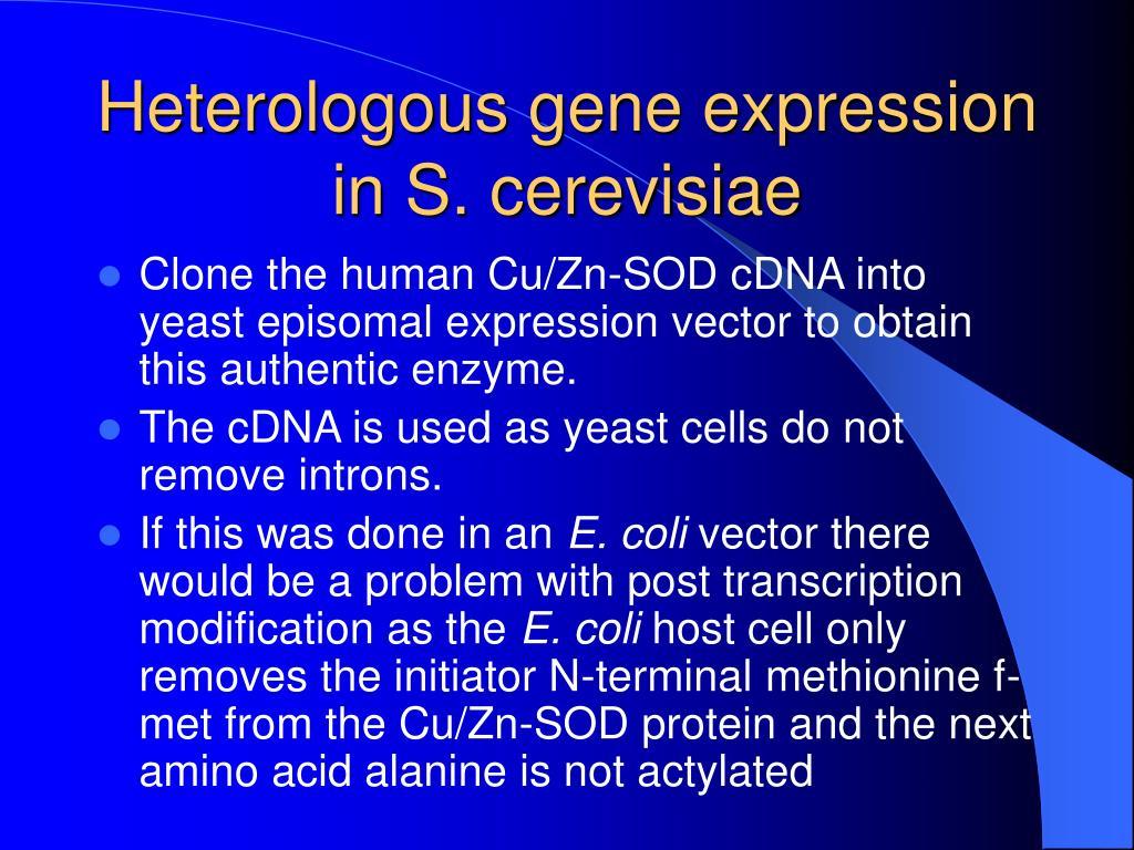 Heterologous gene expression in S. cerevisiae