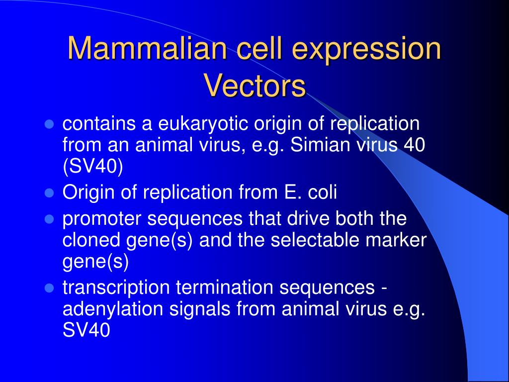 Mammalian cell expression Vectors