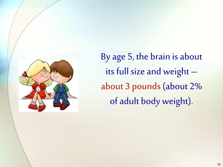 By age 5, the brain is about its full size and weight –