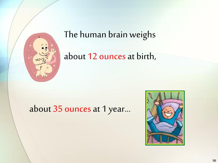 The human brain weighs
