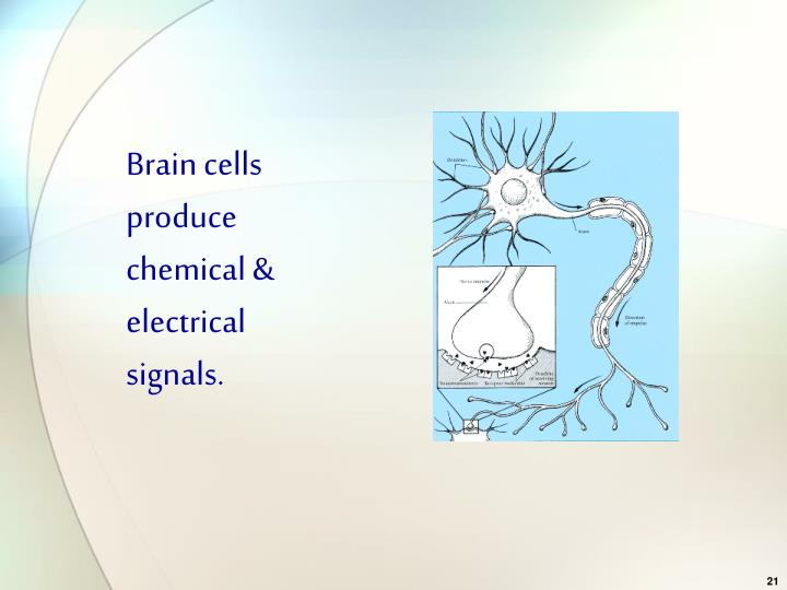 Brain cells produce chemical & electrical signals.