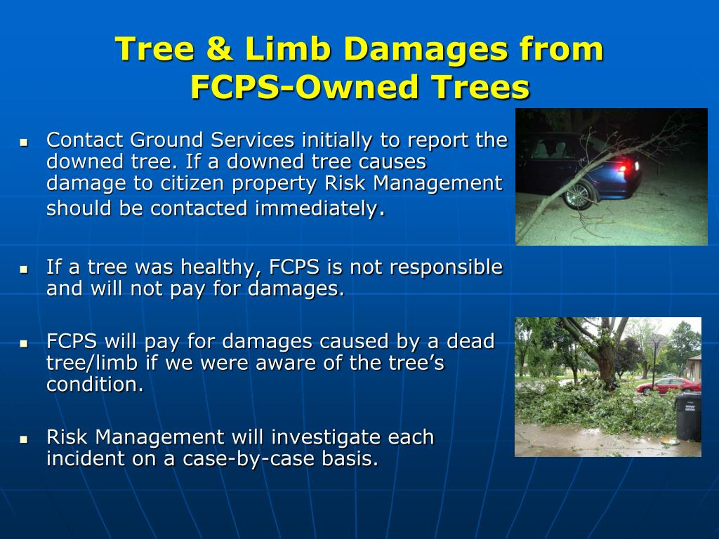 Tree & Limb Damages from
