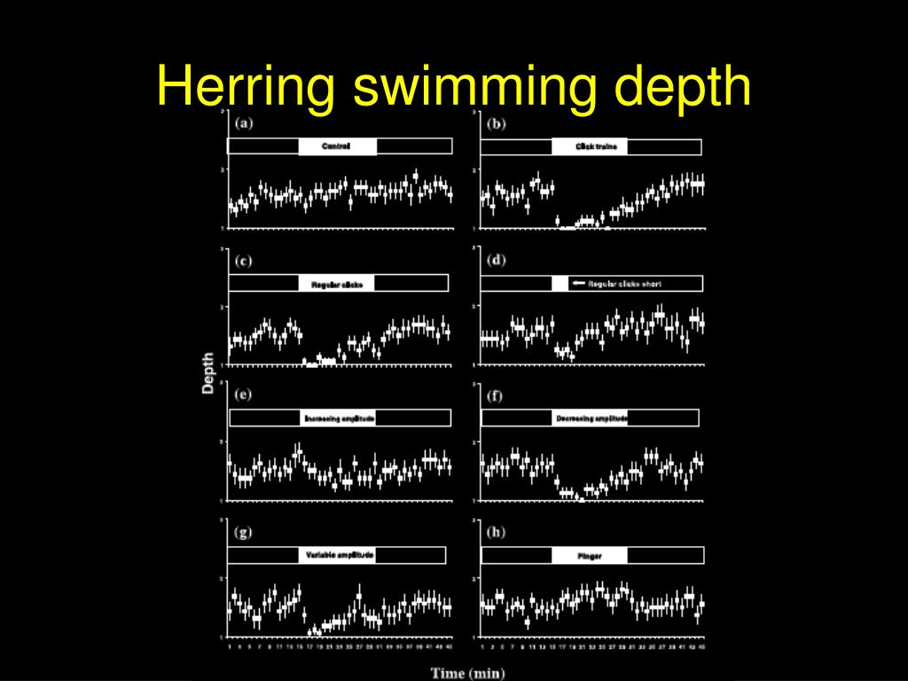 Herring swimming depth