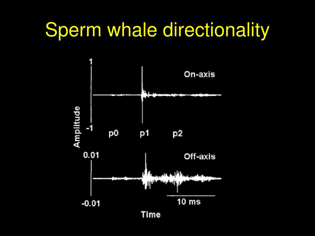 Sperm whale directionality
