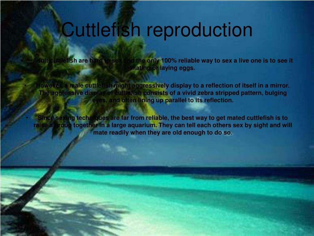 Cuttlefish reproduction