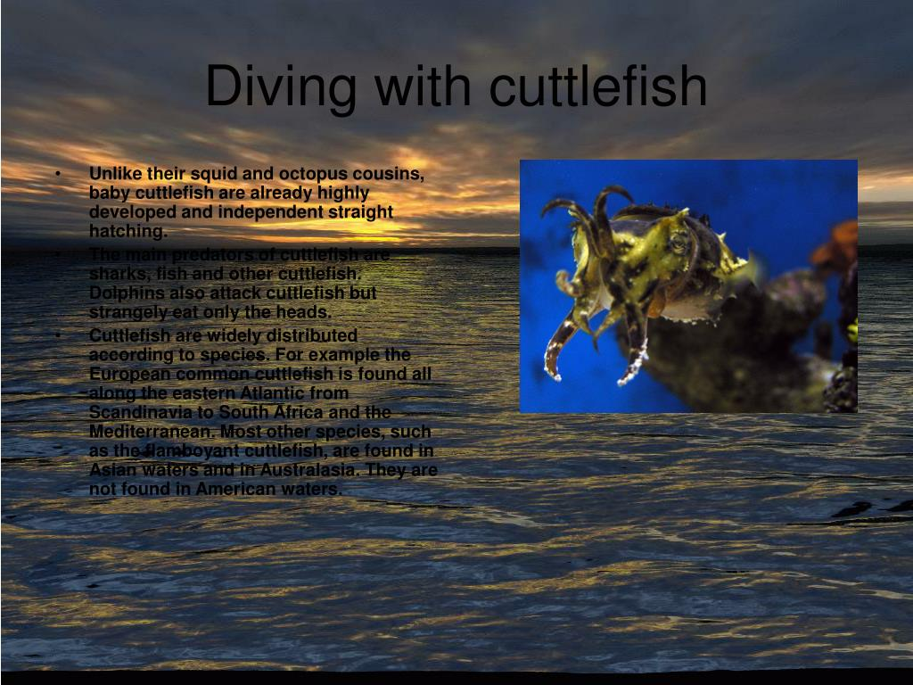 Diving with cuttlefish