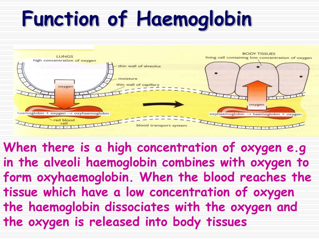 Function of Haemoglobin