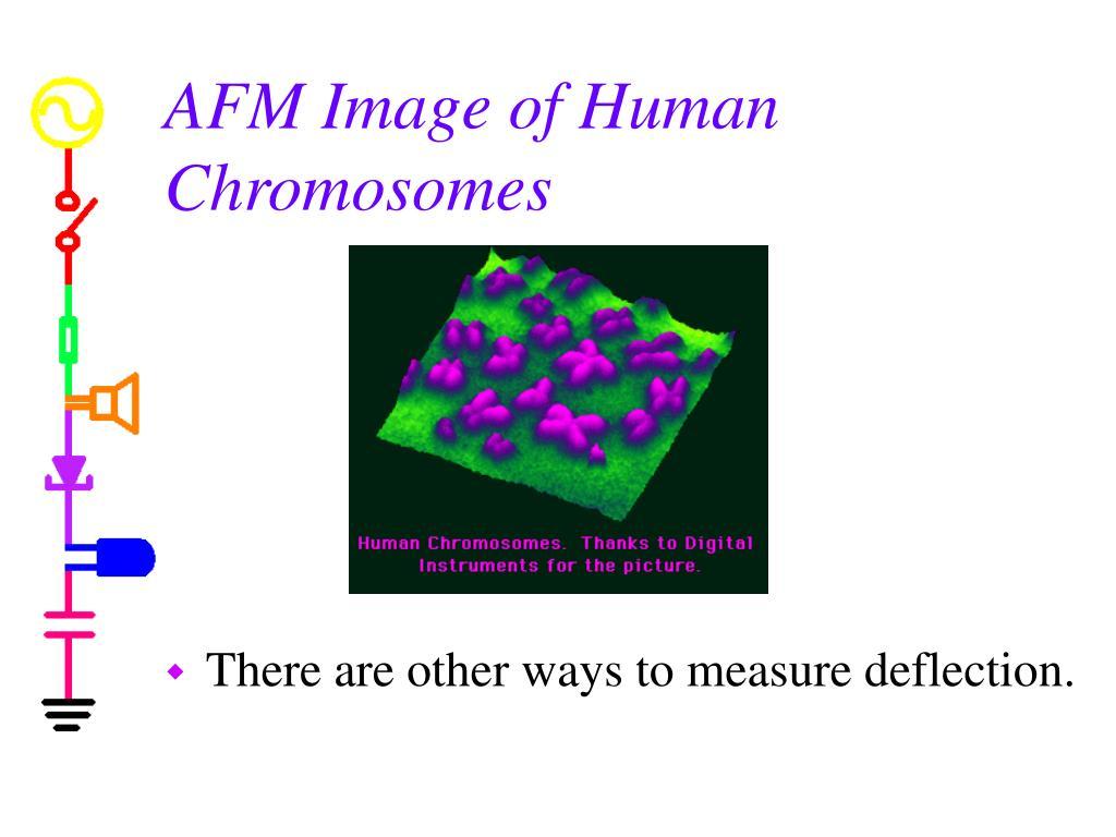 AFM Image of Human Chromosomes