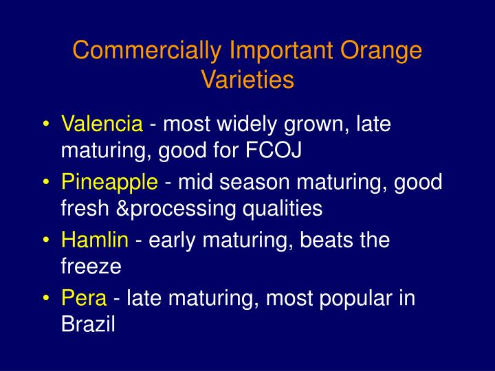 Commercially important orange varieties l.jpg