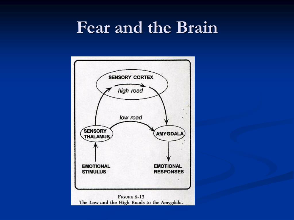 Fear and the Brain