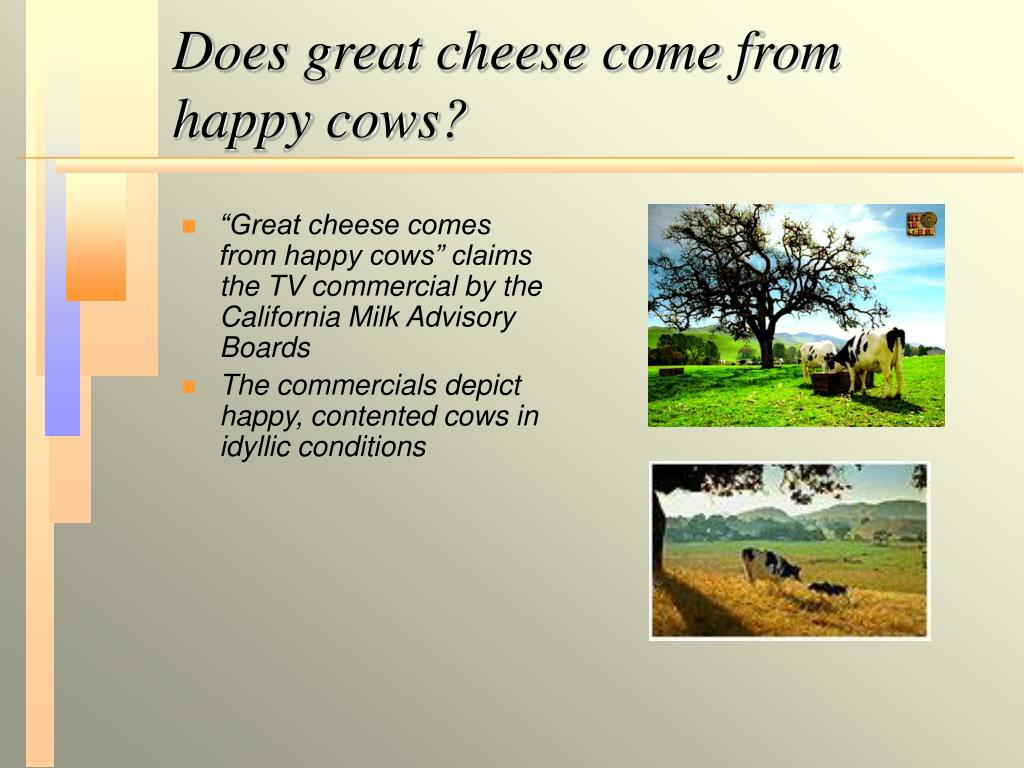Does great cheese come from happy cows?