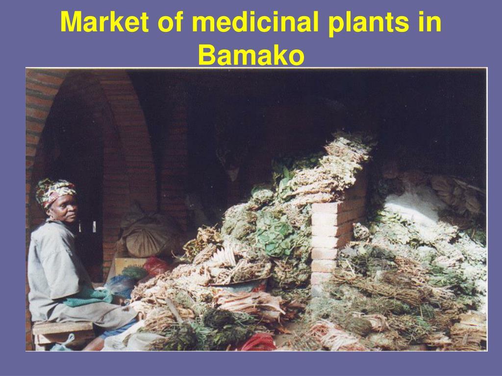 Market of medicinal plants in Bamako