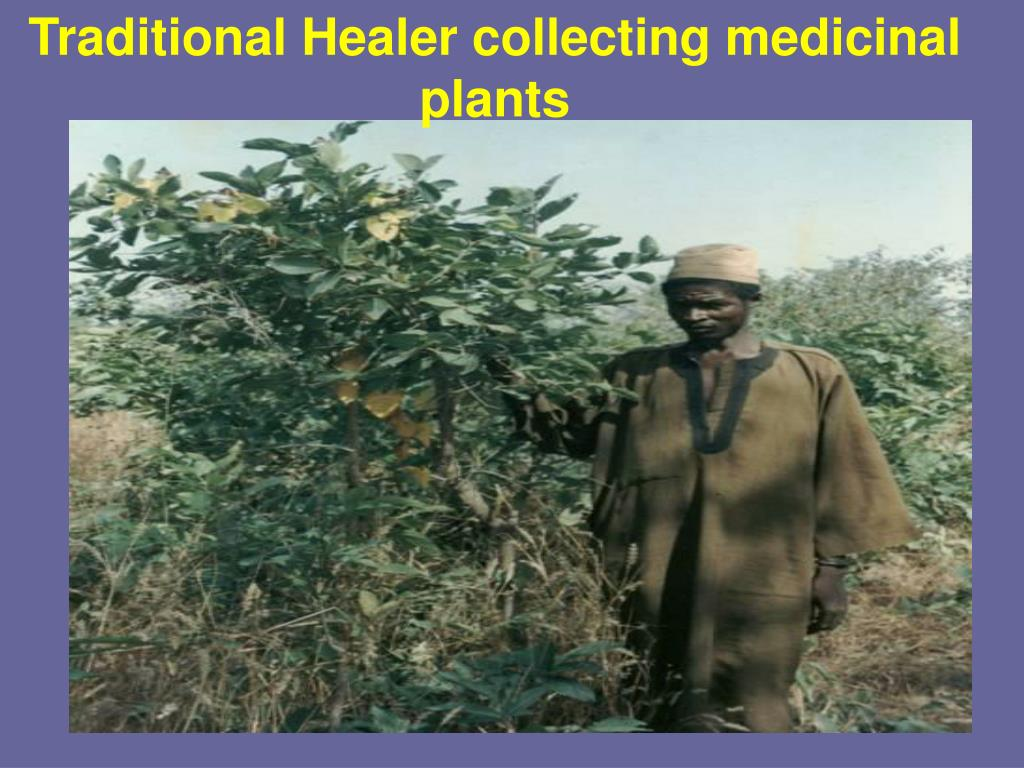 Traditional Healer collecting medicinal plants