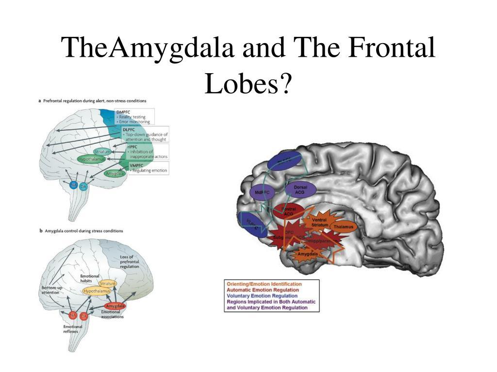 brain sex differences amygdala damage in Kansas City