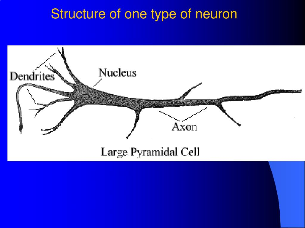 Structure of one type of neuron