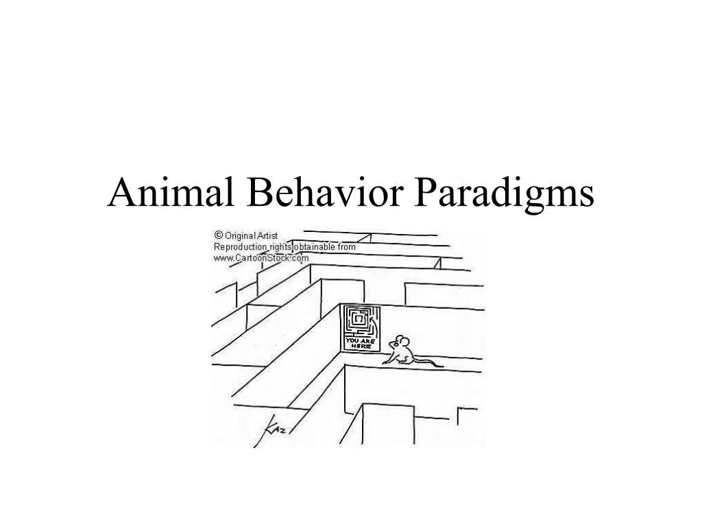 Animal Behavior Paradigms