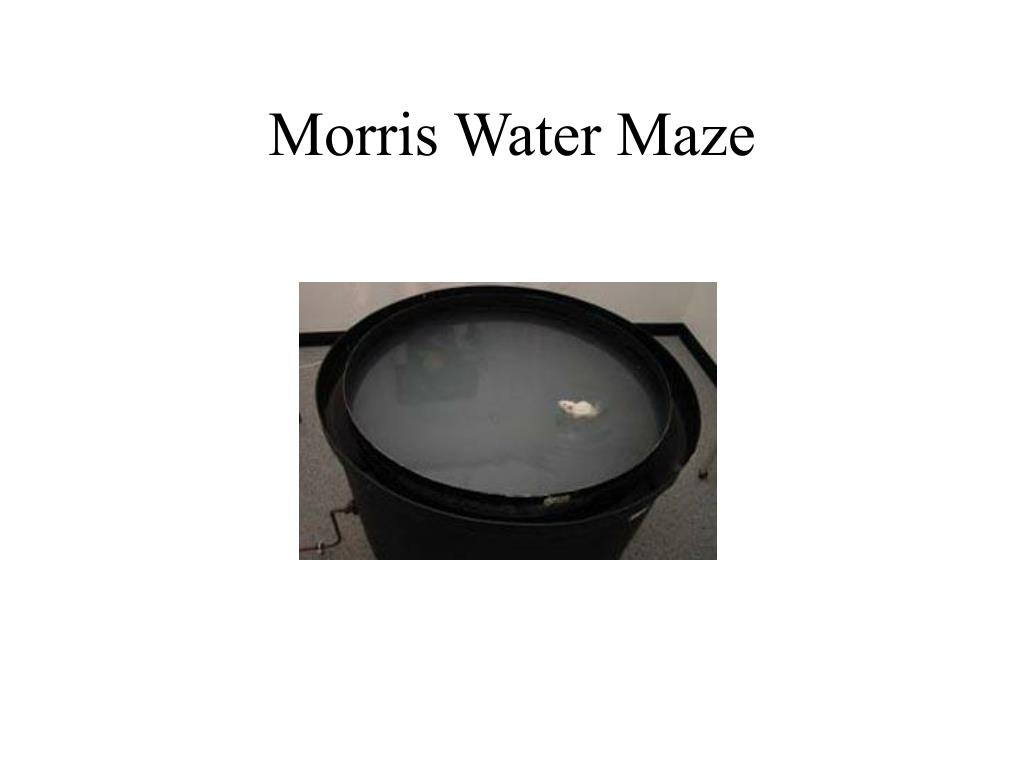 Morris Water Maze