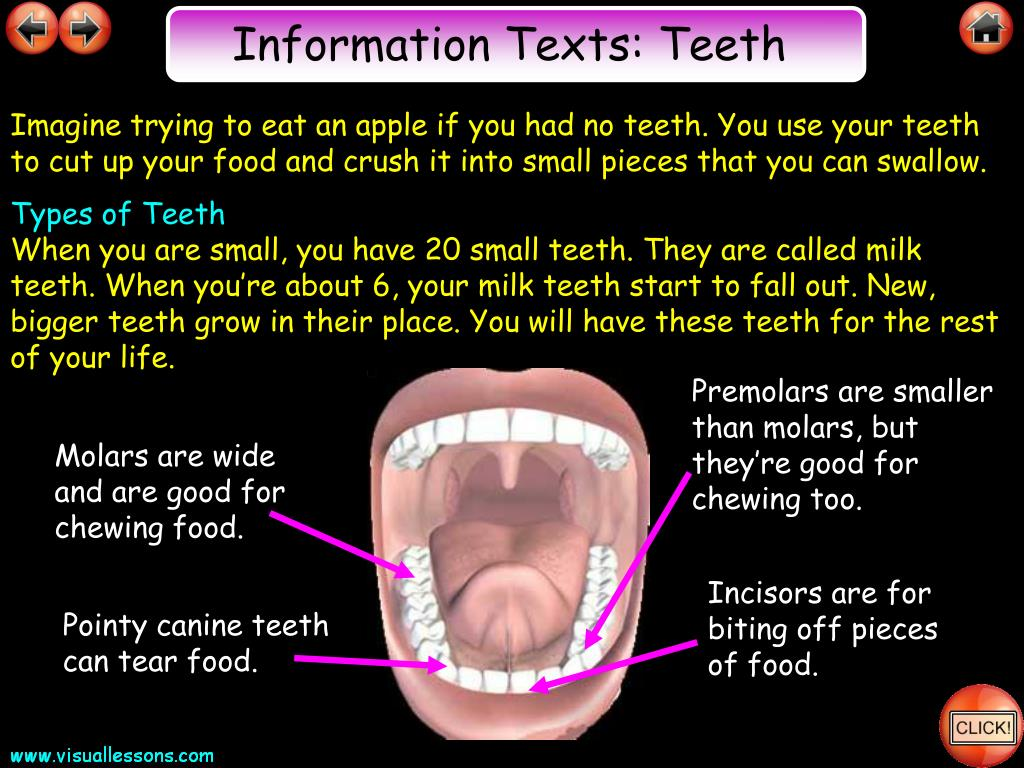 Information Texts: Teeth