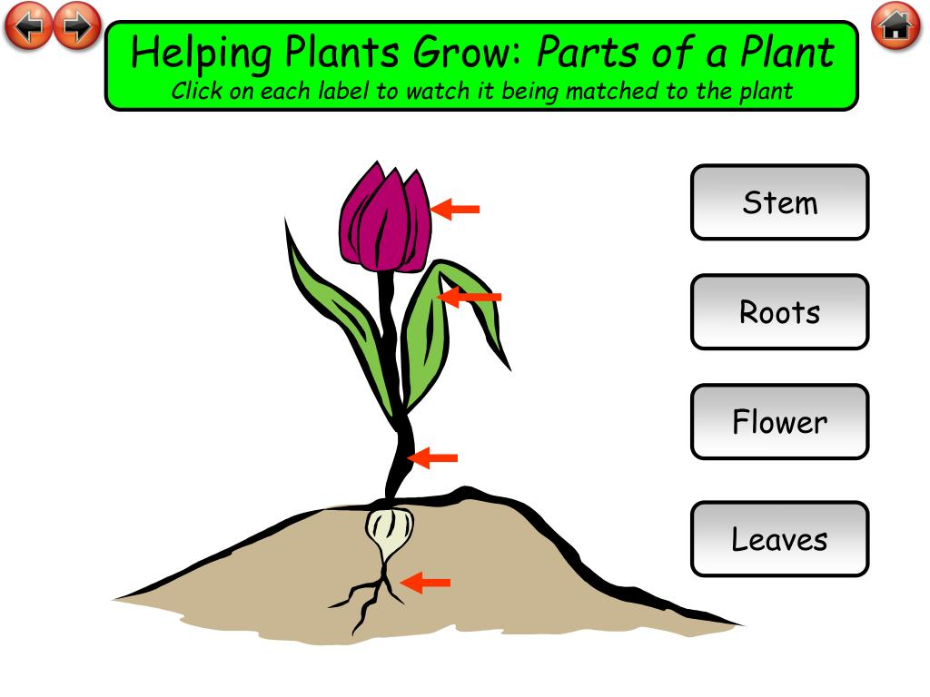 Helping Plants Grow: