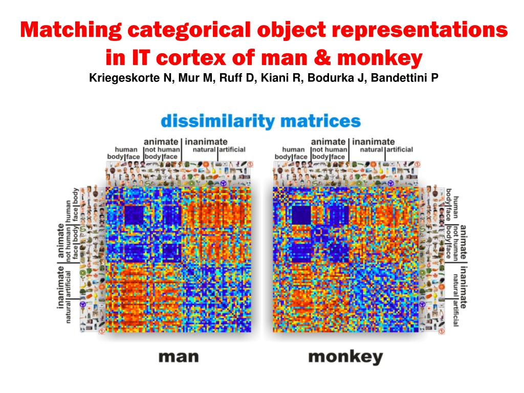 Matching categorical object representations