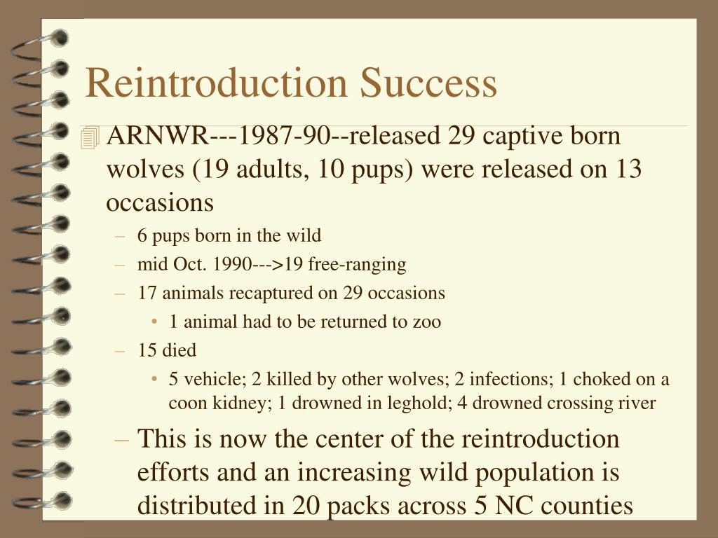 Reintroduction Success