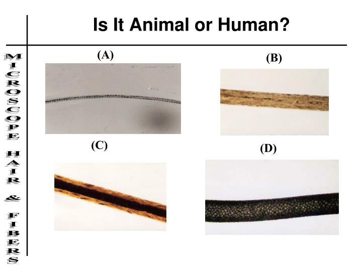 Is It Animal or Human?