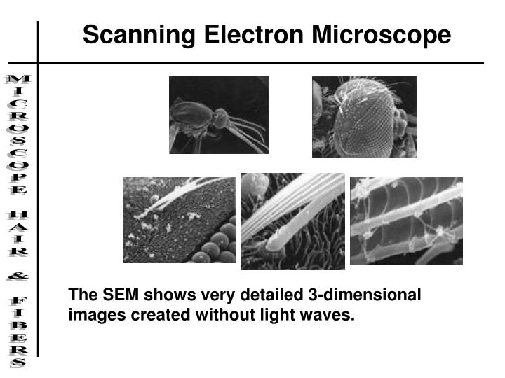 Scanning Electron Microscope