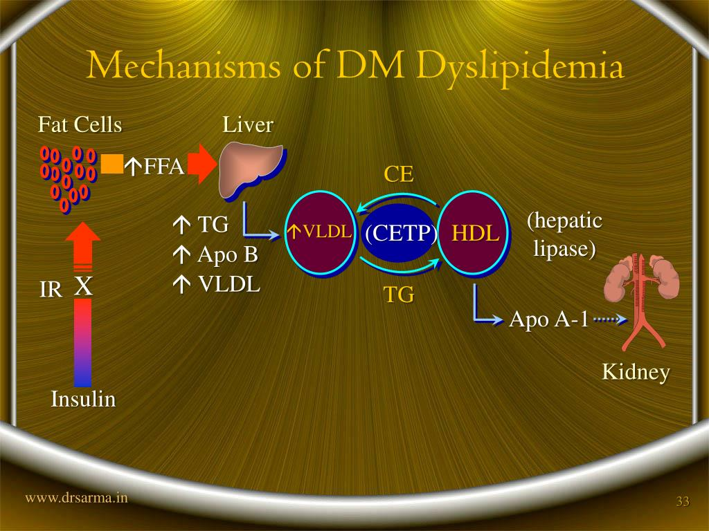 Mechanisms of DM Dyslipidemia