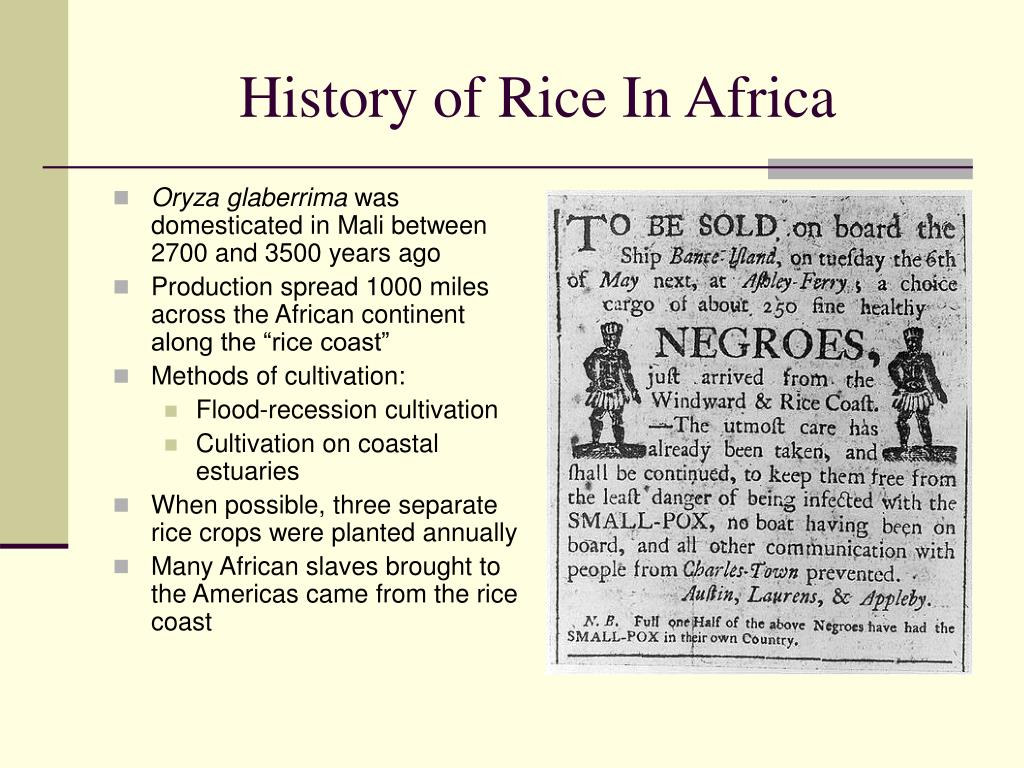 History of Rice In Africa