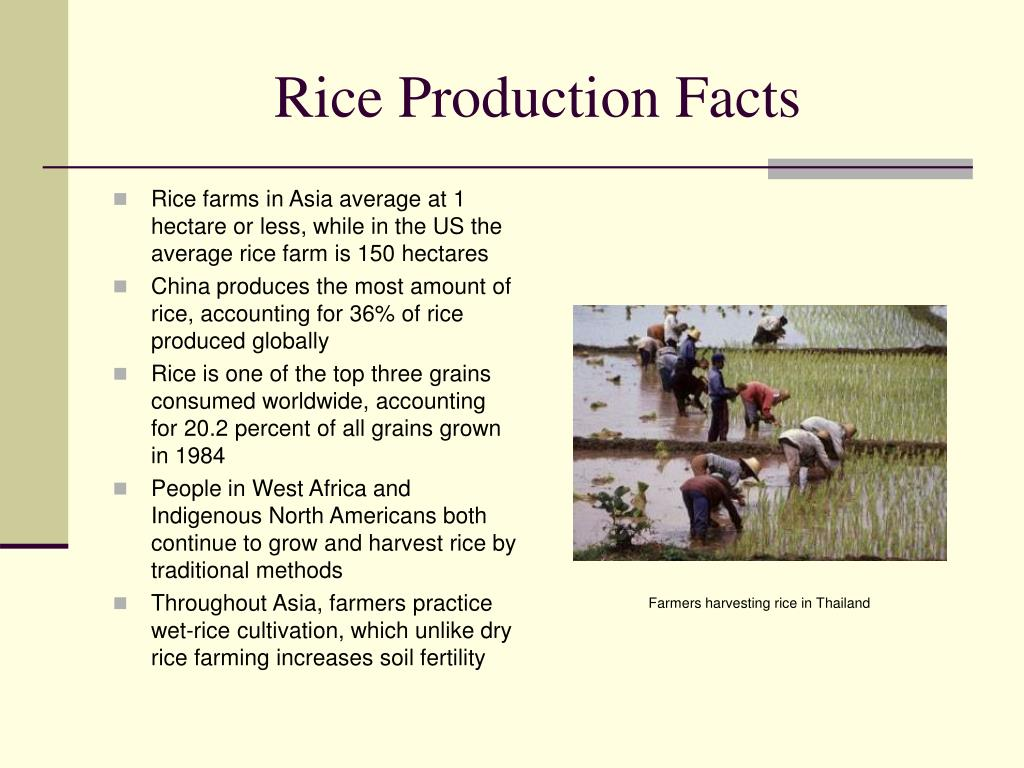 Rice Production Facts