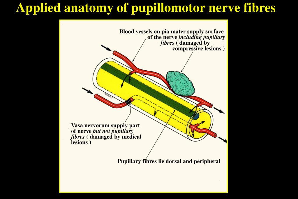 Applied anatomy of pupillomotor nerve fibres