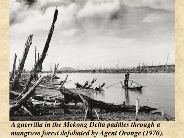 A guerrilla in the Mekong Delta paddles through a mangrove forest defoliated by Agent Orange (1970).