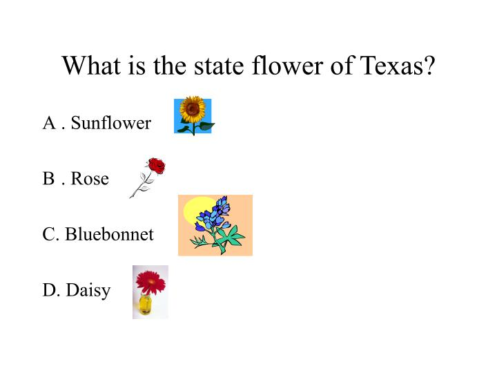 What is the state flower of texas
