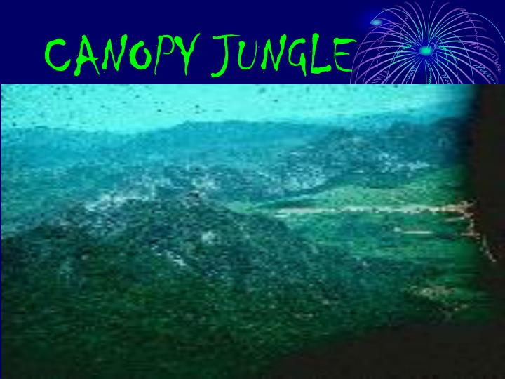 CANOPY JUNGLE