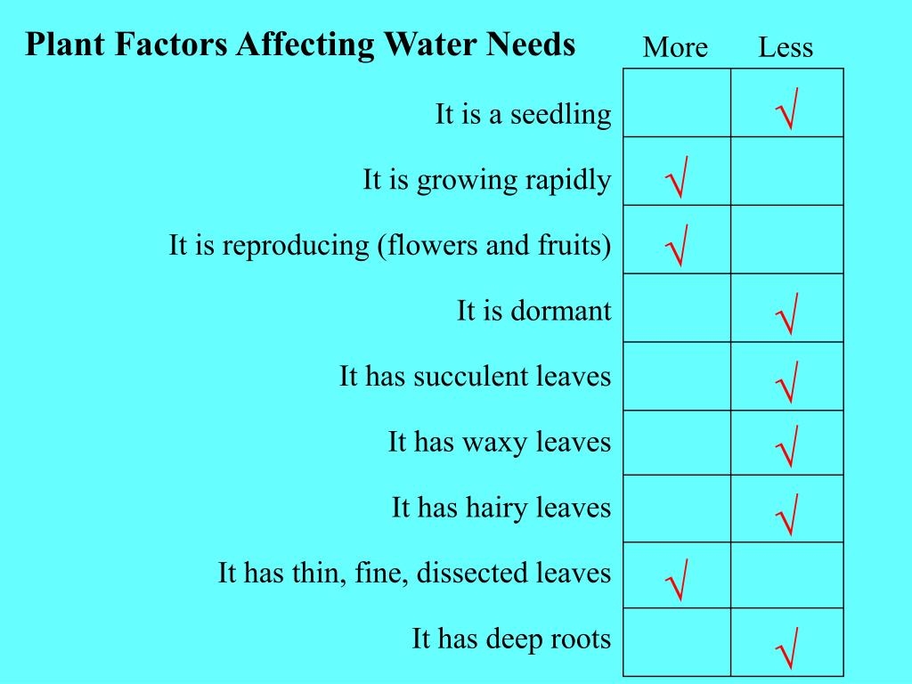 Plant Factors Affecting Water Needs