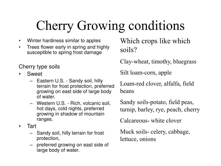 Cherry Growing conditions