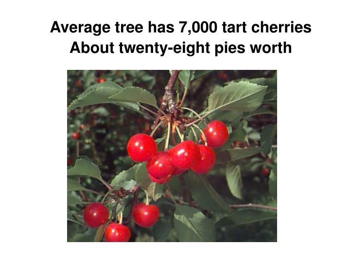 Average tree has 7,000 tart cherries