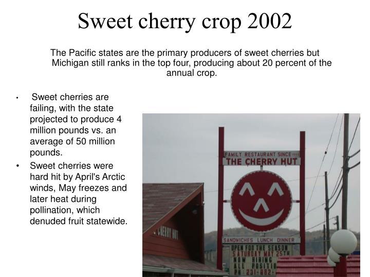 Sweet cherry crop 2002