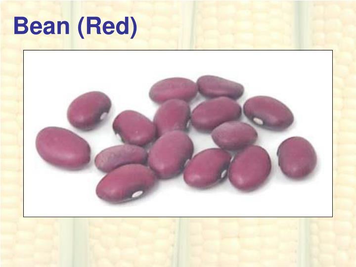 Bean (Red)
