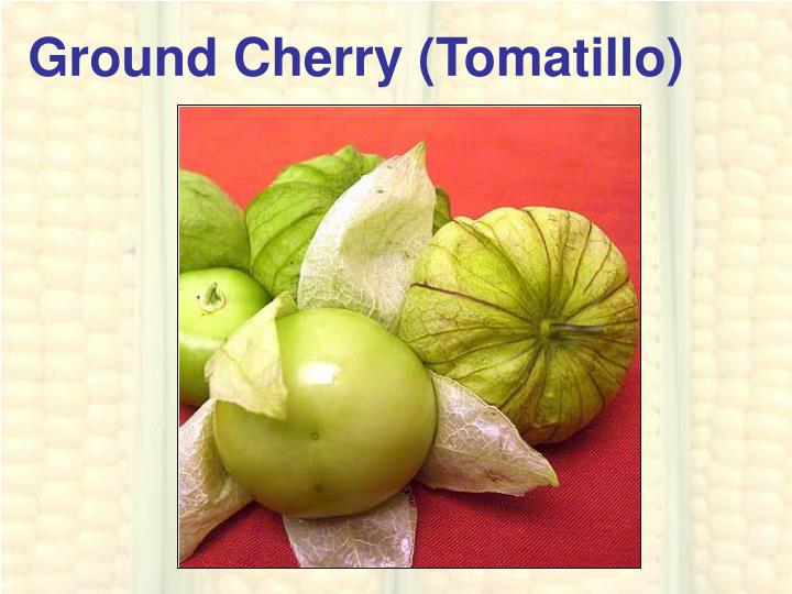 Ground Cherry (Tomatillo)
