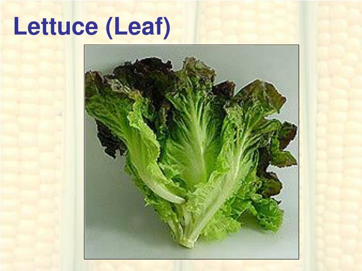 Lettuce (Leaf)