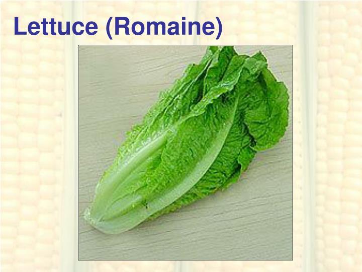 Lettuce (Romaine)